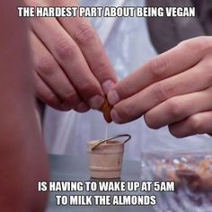 Milking almonds
